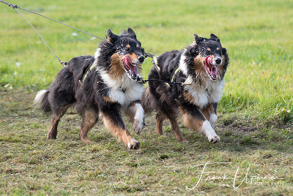 Schlittenhunderennen